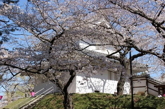 茨城 桜 名所 土浦 亀城公園