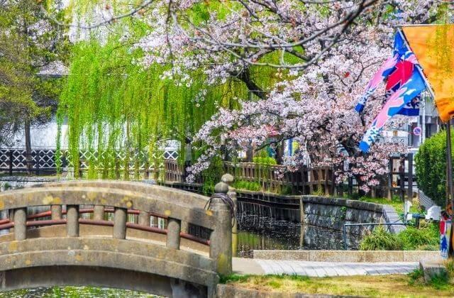 茨城 桜 亀城公園 土浦市