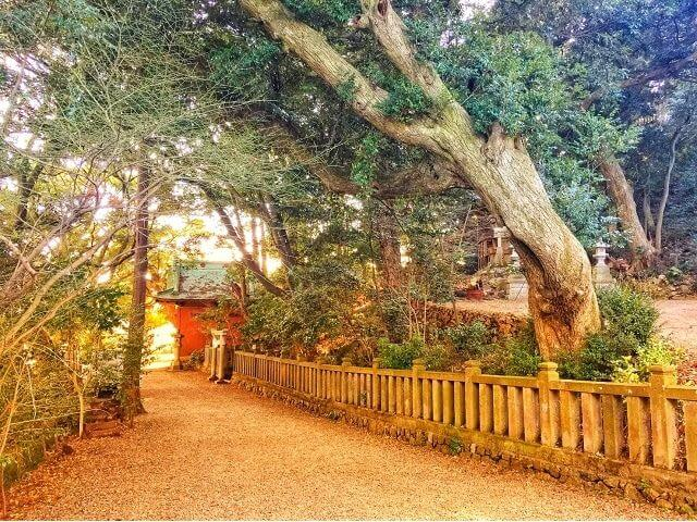 大甕神社 境内 樹叢