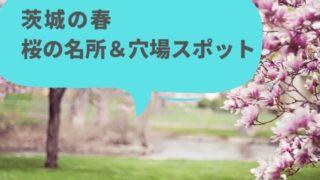 茨城 桜 名所 穴場