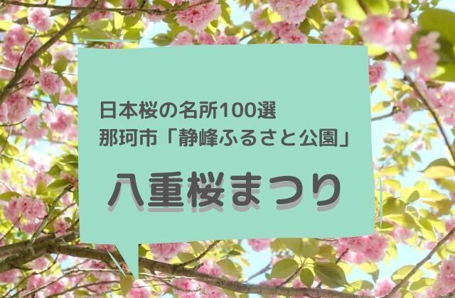 静峰ふるさと公園 八重桜 開花状況