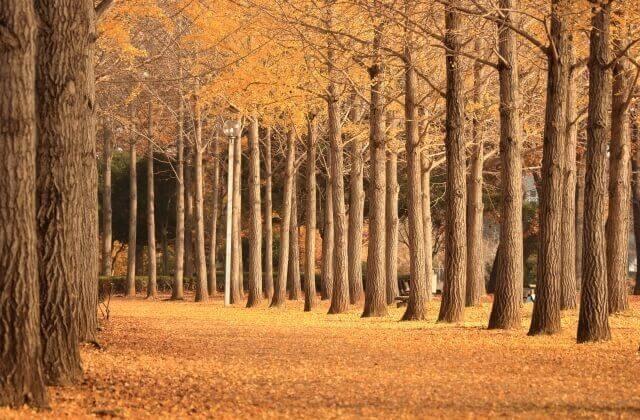 つくば 観光 科学万博記念公園 紅葉