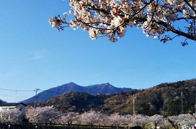 つくば 観光 北条大池 桜
