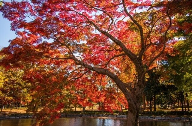 つくば市 洞峰公園 紅葉
