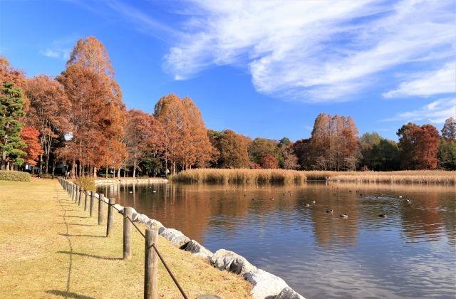 洞峰公園 池 園内