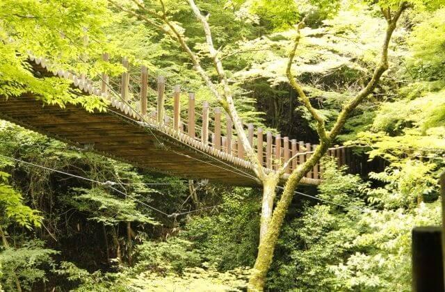 小滝沢キャンプ場 花貫渓谷の散策 吊橋の下