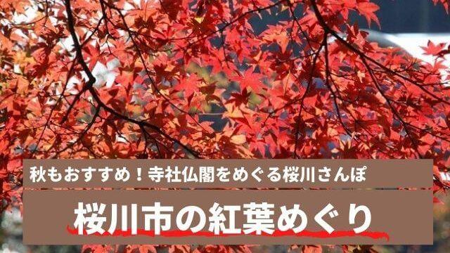 桜川市 紅葉 おすすめ