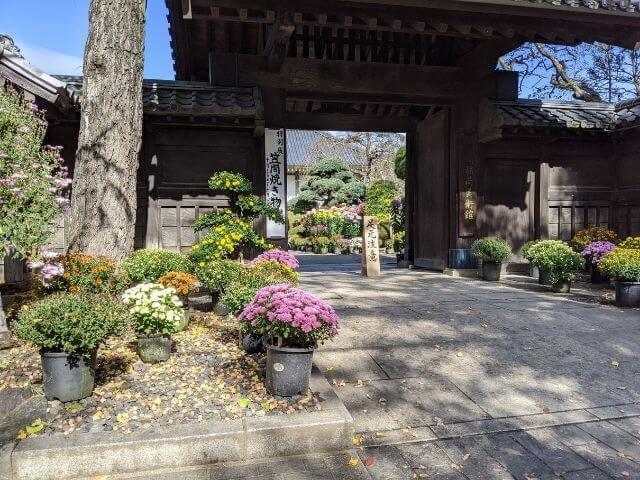 笠間の菊まつり 笠間稲荷美術館 菊人形展