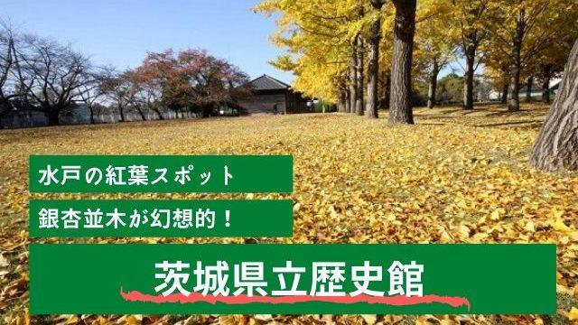 茨城県立歴史館 水戸市 紅葉 イチョウ並木