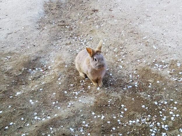 牛久大仏 小動物公園 ふれあい広場 うさぎ