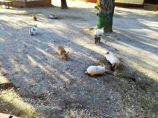 牛久大仏 ふれあい動物公園 うさぎ 小動物公園