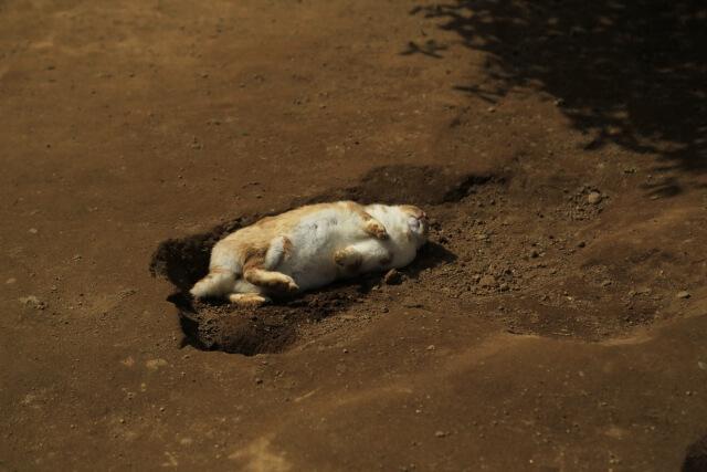 牛久大仏 ふれあい広場 寝ているうさぎ 小動物公園