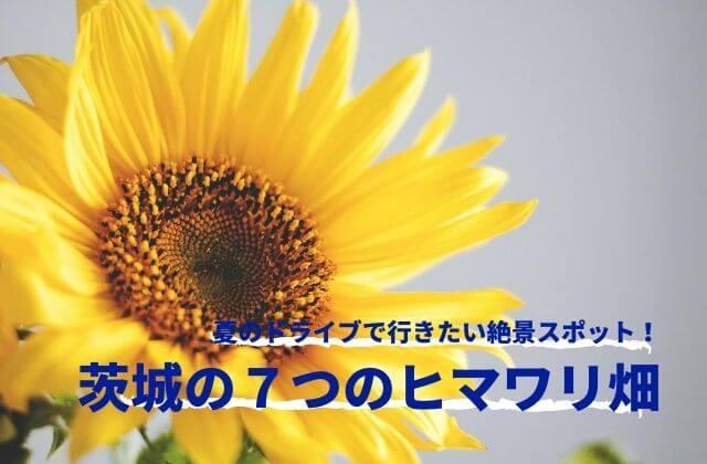 茨城 ひまわり畑 おすすめ 見頃 イベント