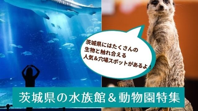 茨城県 水族館 動物園 おすすめ
