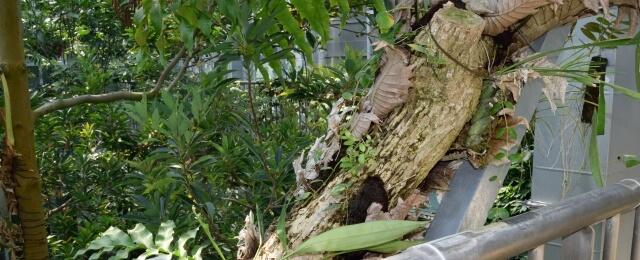筑波実験植物園 熱帯温室林 植物