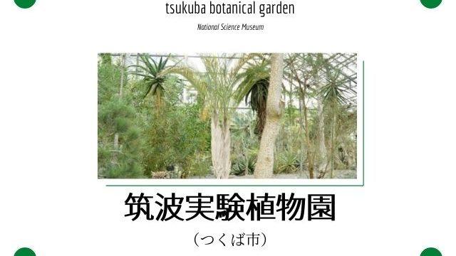 筑波実験植物園 ランチ アクセス 駐車場
