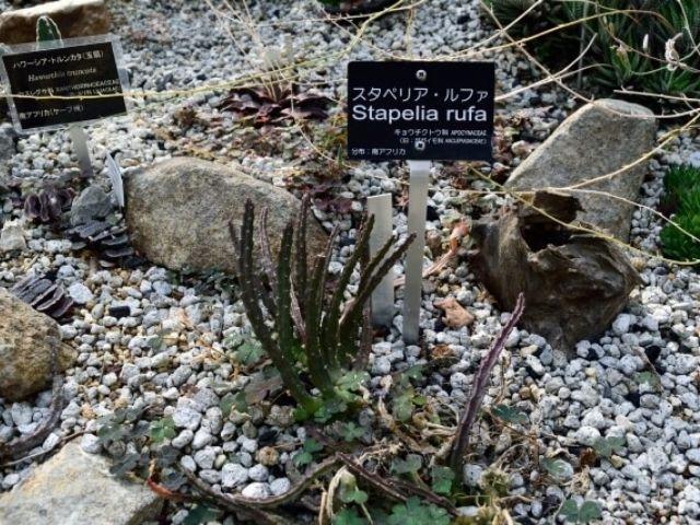 筑波実験植物園 屋内展示 サバンナ温室 多肉植物