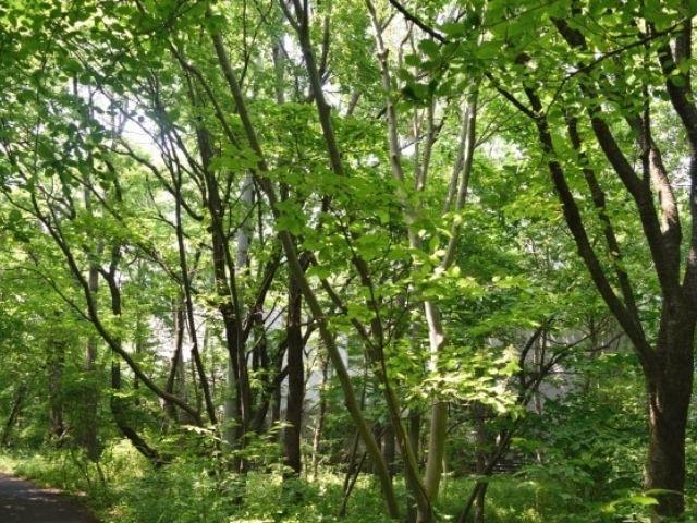 筑波実験植物園 屋外展示 森林エリア 森の中