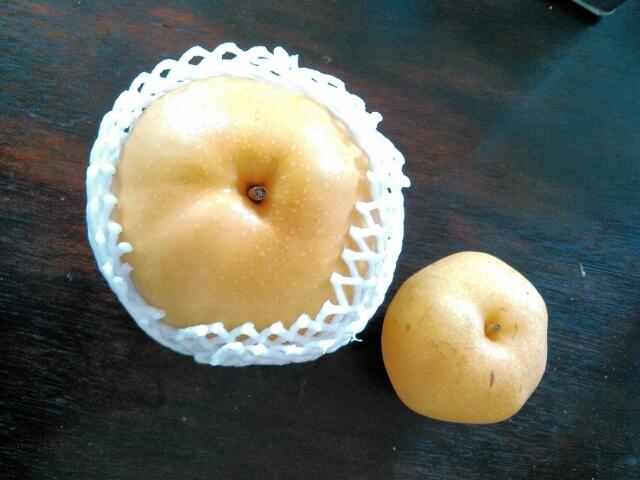 茨城 梨 品種 恵水 豊水 新高