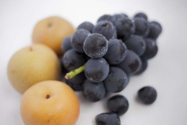 茨城 ぶどう 梨 秋の味覚 果物狩り