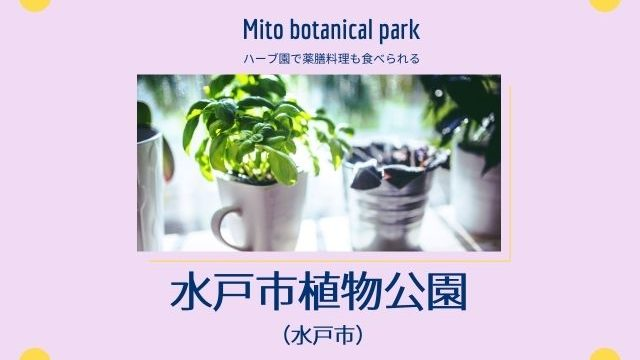 水戸市植物公園 ランチ 駐車場 料金