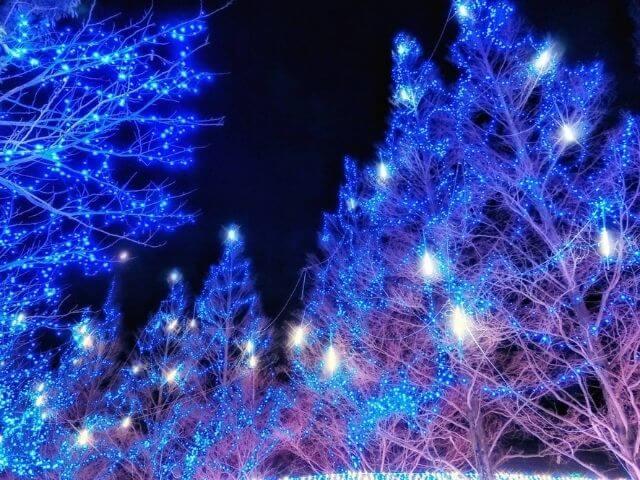 かわちイルミネーション 青いイルミ 樹 茨城県河内町
