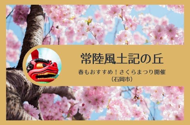 常陸風土記の丘 桜 開花状況 石岡市