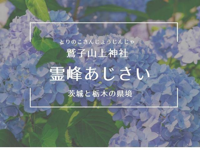 鷲子山上神社 あじさい
