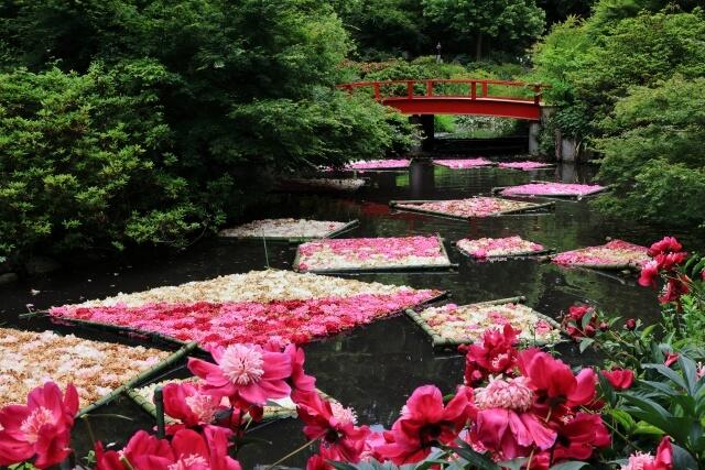 つくば牡丹園 花いかだ 茨城県つくば市